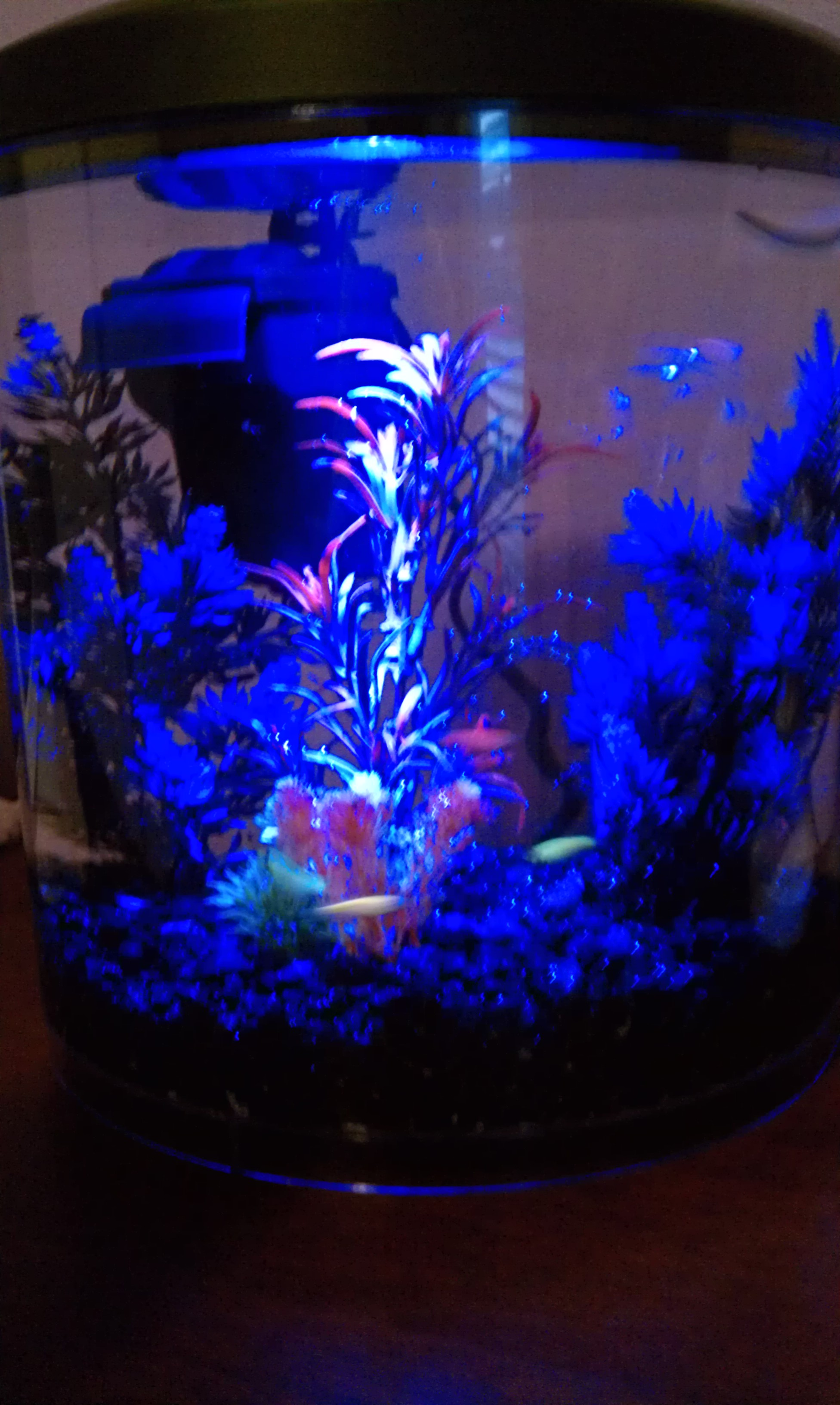 Glo fish two moms and a journey for Black light for fish tank
